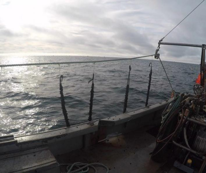 Deploying mussel grow lines at offshore mussel farm site