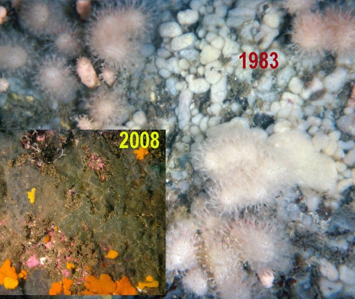Subtidal rock wall communities in 1983 and 2008
