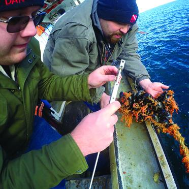 Salem State alumni check on mussel agriculture projects