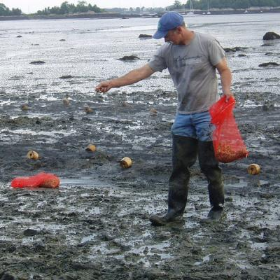 man wearing thigh-high rubber boots, walking in muddy low tide, sprinkling stuff from out of a red bag in his hand